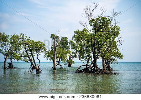 Pristine Beach On Long Island, Andaman And Nicobar Islands, India. Gnarled Mangrove Trees In Sea Wat