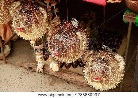 Blowfish Or Puffer Fish In Souvenir Shop. Porcupinefish, Thailand.