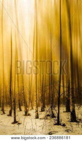 Yellow Light In The Winter Aspen Forest