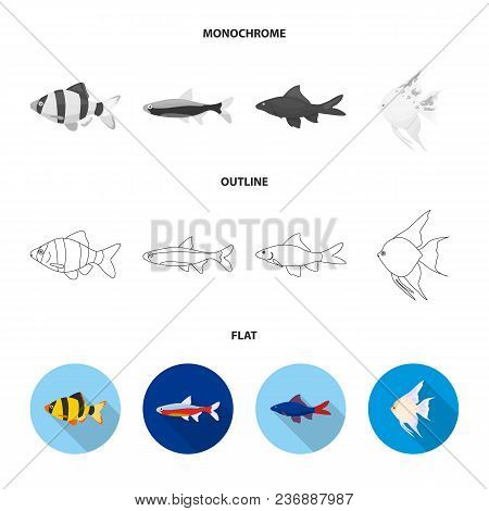Botia, Clown, Piranha, Cichlid, Hummingbird, Guppy, Fish Set Collection Icons In Flat, Outline, Mono
