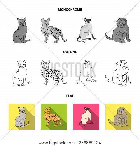 Turkish Angora, British Longhair And Other Species. Cat Breeds Set Collection Icons In Flat, Outline