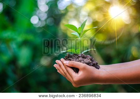 Earth Day In The Hands Of Trees Growing Seedlings. Bokeh Green Background Female Hand Holding Tree O