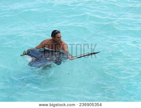 Grand Cayman, Cayman Islands - Dec 23, 2012: Unidentified Tour Guide Holds A Manta Ray In The Shallo