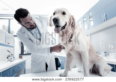 Medical Checkup. Nice Positive Happy Dog Sitting On The Table And Showing Its Tongue While Being Che