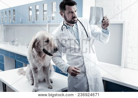 Medical Diagnostics. Serious Nice Smart Doctor Standing Near His Dog And Looking At The X Ray Image