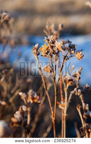 Dry Plant Flowers In Warm Sunlight At Winter