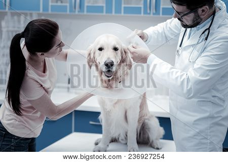 Medical Collar. Nice Cute Beautiful Dog Sitting On The Table And Wearing E Collar While Having Healt