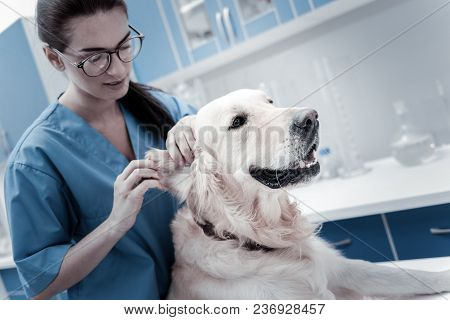 Female Veterinarian. Nice Positive Young Woman Standing Behind The Dog And Caring About Him While Wo