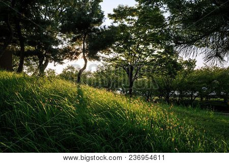 Sun Lights Up The Lush Grass On Japan's Official Smallest Mountain, Tempozan In Osaka. The Peak Is 4