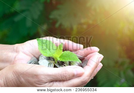 Hand Holding Coins With Tree Under Sunshine And Gardening Green Background.