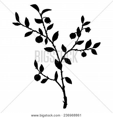 Silhouette Of Bilberry Plant, Branch With Leaves, Flowers And Berries, Isolated Floral Element, Hand