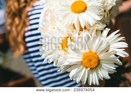 Girl Carries A Bouquet Of Flowers Of Chamomiles