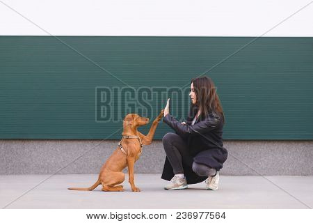 The Dog Gives Five Girls. A Trained Puppy Performs Teams. The Owner And Cute Dog Are Playing Against