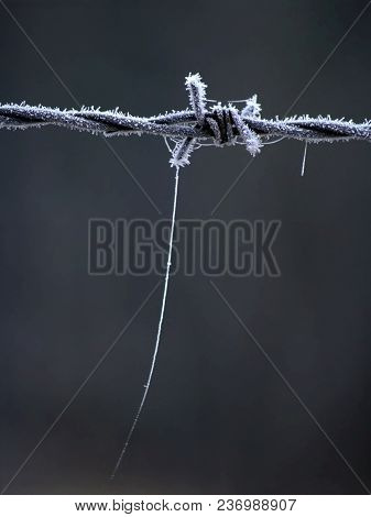 Frosted Barbed Wire With Spiderweb In The Winter At Old Factory