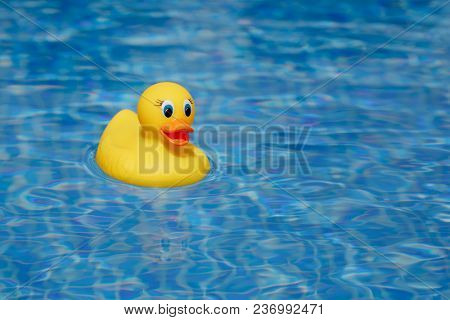 yellow rubber duck in blue swimming pool
