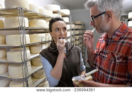 Couple of cheese makers testing bite of cheese in cellar