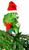 Green amazon parrot holding a golden gift parcel poster