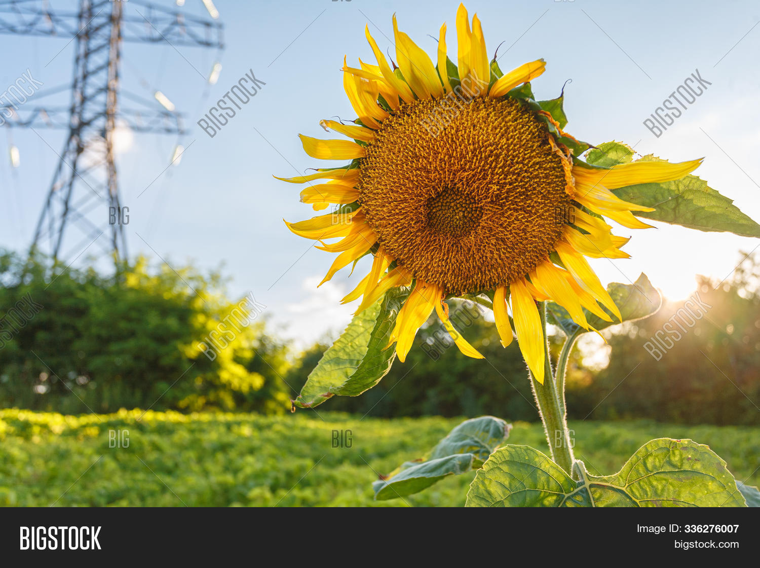 Close Blooming Yellow Image Photo Free Trial Bigstock