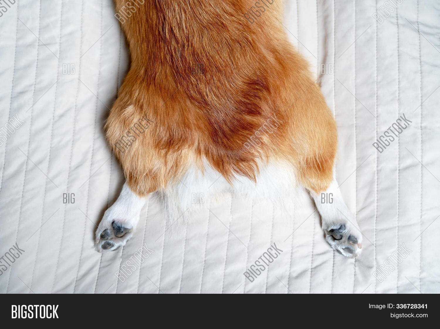 Pretty Back Paws Red Image Photo