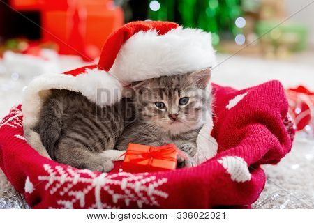 Christmas Cat Wearing Santa Claus Hat Holding Gift Box On Plaid Under Christmas Tree. Christmas Pres
