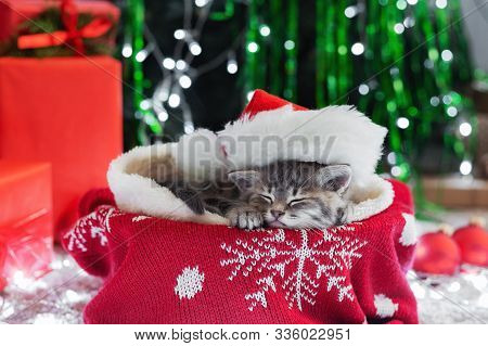 Sleeping Christmas Cat. Beautiful Little Tabby Sleeping Kitten, Kitty, Cat In Red Santa Claus Hat Ne