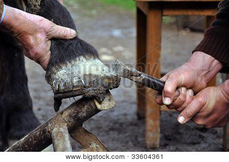 A Farrier Blacksmith Hooves A Horseshoe