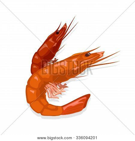 Prepared Steamed Or Boiled Red Tiger Shrimps. Cooked Prawn. Seafood For Gourmet. Source Of Omega-3 F