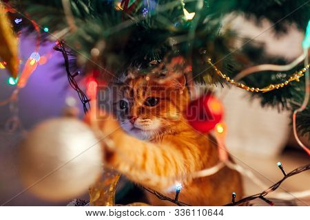 Ginger Cat Sitting Under Christmas Tree And Playing With Toys And Lights. Christmas And New Year Con