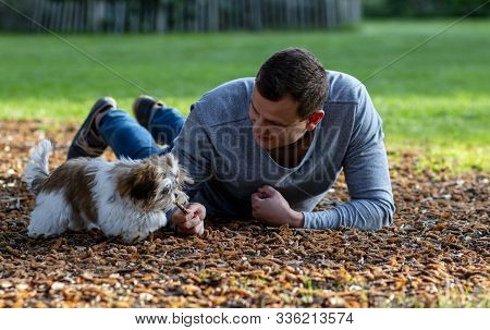 Man Wallowing In A Park On Cones With A Beautiful Puppy Interacting With An Animal