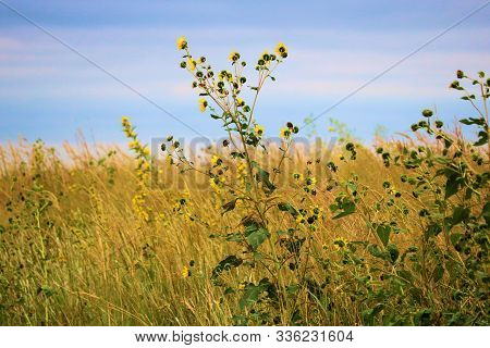 Lush Plants And Wildflowers On The Vast Windswept Prairie Taken In The Kansas Plains