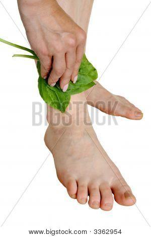 Tratamento por uma folha