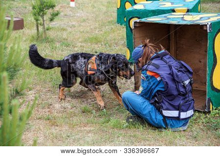 Noginsk, Russia - June 06, 2018. Female Handler Trains A Search-and-rescue Dog To Locate Missing Peo