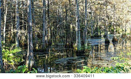 Autumn In Cypress Swamp In Louisiana Bayou
