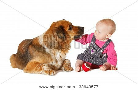 Do Not Kiss Me... 9 Months Old Baby And Dog Playing On White Bachground