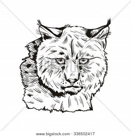 Eurasian Lynx Isolated Vector Illustration. Monochrome Hand Drawn Wild Animal Sketch Icon. Black And