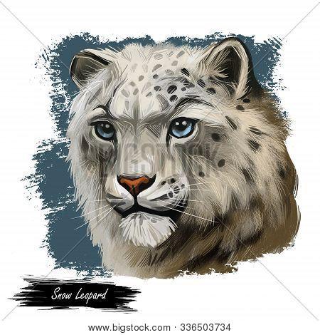 Snow Leopard Portrait In Close Up. Watercolor Digital Art Illustration Of Panthera Uncia. Mammal Wit