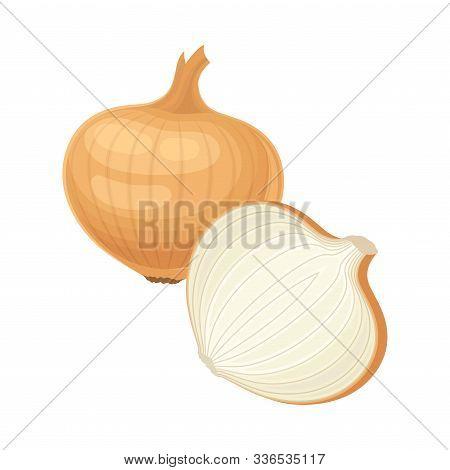 Whole And Half Unpeeled Onion Bulb Vector Illustrated Item