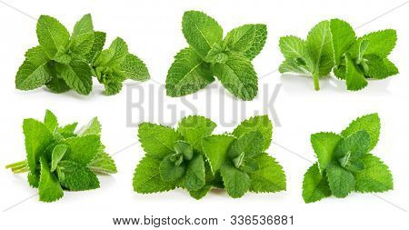 Kit leaves mint. Still life and set of herbs for packing. Isolated on white background.
