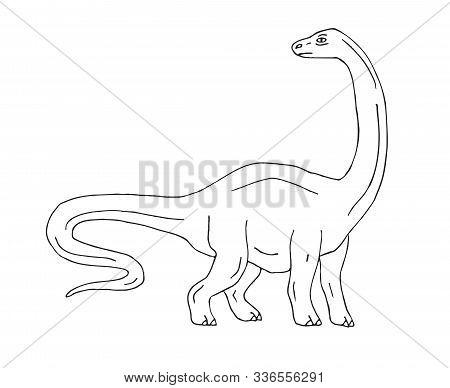 Vector Hand Drawn Sketch Diplodocus Brachiosaurus Dinosaur Isolated On White Background