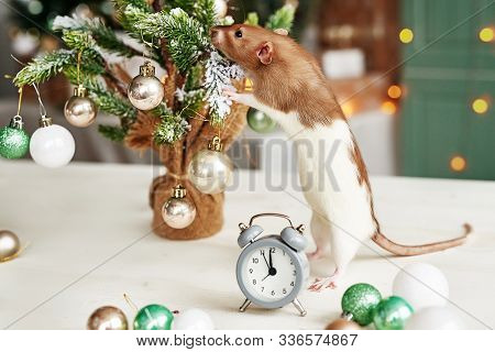 Christmas Rat Symbol Of The New Year 2020. Year Of The Rat. Chinese New Year 2020. Christmas Toys, B