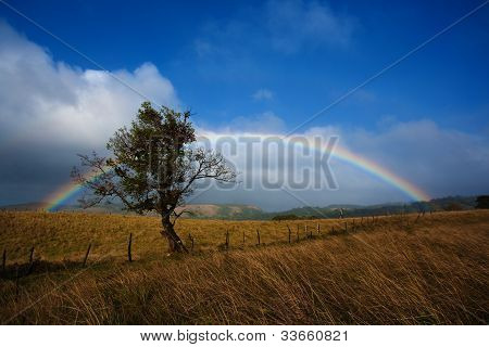 Pretty Long Rainbow