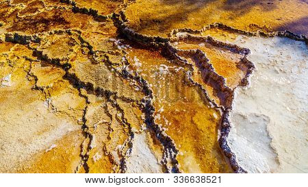 Brown Bacteria Mats created by cyanobacteria in the water of the Travertine Terraces formed by the Geysers on the Main Terrace at Mammoth Hot Springs in Yellowstone National Park, Wyoming, USA poster