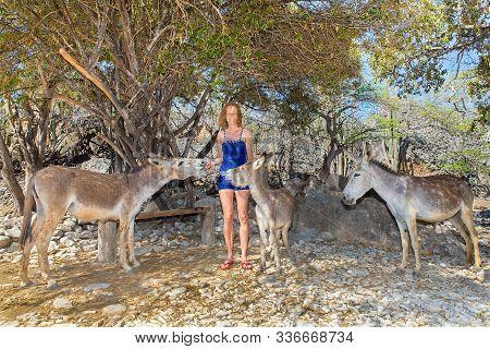 Caucasian Woman Feeding Group Of Donkeys Under Tree On Island Bonaire