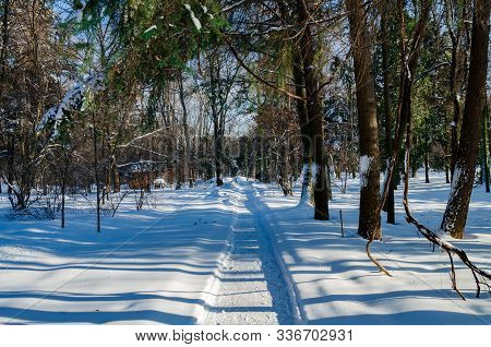 Walking Path Between Trees Covered In White Snow, Winter Day In The Park