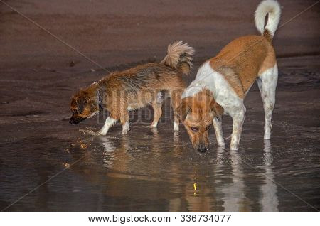 Canine Mates. Happy Dogs Exploring Together On A Tropical Sandy Beach Waters Edge In Huay Yang, Thai