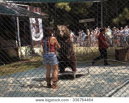 Williston, Florida-september 21, 2019: At Two Tails Ranch, A Syrian Brown Bear From Bearadise Ranch