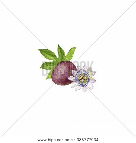 Watercolor Drawing Passion Fruit, Leaf And Flower, Passiflora, Hand Drawn Illustration