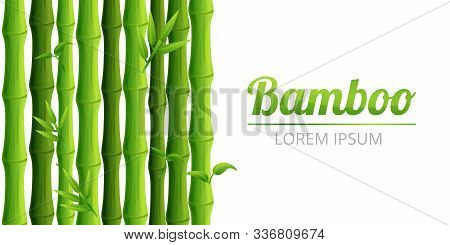 Bamboo Forest Concept Banner. Cartoon Illustration Of Bamboo Forest Vector Concept Banner For Web De