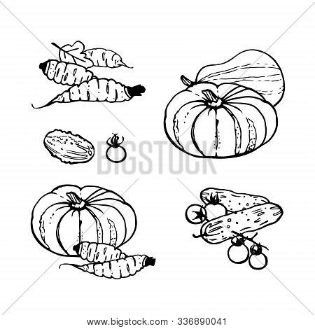 Set Of Assorted Vegetables - Pumpkins, Carrots, Cucumbers And Tomatoes. Line Art. Traditional Hand D