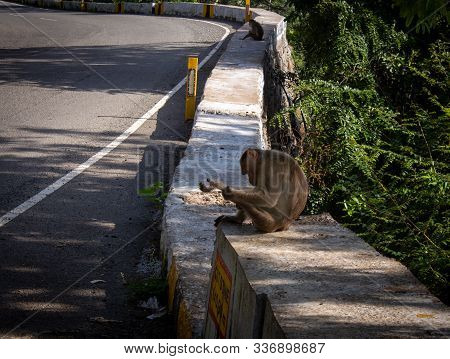 Monkeys Sitting On Parapet Wall Along The Ghat Road To Yercaud, Salem, India. Photographed With Focu